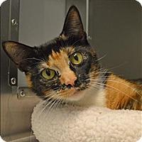 Adopt A Pet :: Mirage - Sherwood, OR