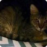 Adopt A Pet :: Gilda 8008 - Columbus, GA
