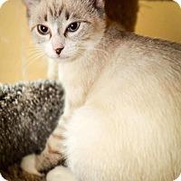 Adopt A Pet :: Lightening - Trevose, PA