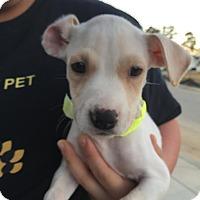 Adopt A Pet :: Tina - Summerville, SC