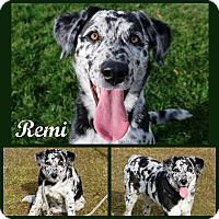 Adopt A Pet :: Remi - Idaho Falls, ID