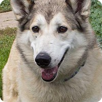 Adopt A Pet :: Bella - Mason, MI
