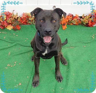 Labrador Retriever Mix Dog for adoption in Marietta, Georgia - JACKSON - adopted @ off-site