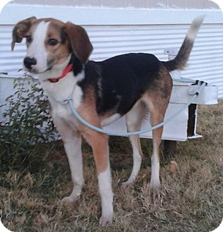 Collie Mix Dog for adoption in Manhattan, Kansas - Tess
