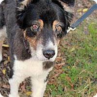 Adopt A Pet :: Wilson - Youngsville, NC