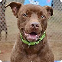 Adopt A Pet :: Ronan - Athens, GA