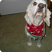 Adopt A Pet :: June - Kannapolis, NC