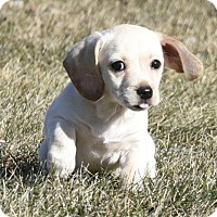 Adopt A Pet :: Natasha - Mechanicsburg, PA