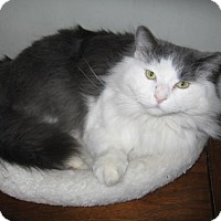 Adopt A Pet :: Liam - Meet me at PetValu in Lemoyne! - Harrisburg, PA