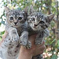 Adopt A Pet :: Hannah - Santa Monica, CA