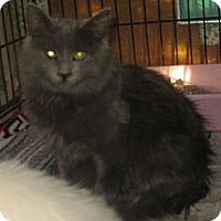 Adopt A Pet :: Orlin - Dallas, TX