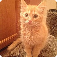 Adopt A Pet :: Muffin - East Hanover, NJ