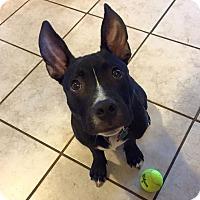 Adopt A Pet :: Gus - Medina, OH