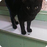 Adopt A Pet :: Teddy - Arkadelphia, AR