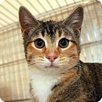 Adopt A Pet :: Mimosa - Waco, TX