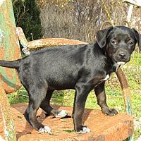 Adopt A Pet :: ABRA - Hartford, CT