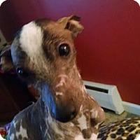 Adopt A Pet :: Zelda in Michigan - Lansing, MI