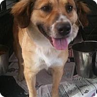 Adopt A Pet :: Maggie - Pembroke, GA