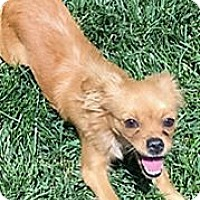 Adopt A Pet :: MINNOW - Pleasanton, CA
