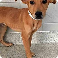 Adopt A Pet :: Trevor - Plainfield, IL
