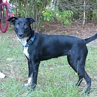 Australian Cattle Dog Mix Dog for adoption in Conway, South Carolina - Millie