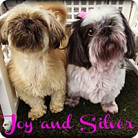 Adopt A Pet :: SILVER - Phoenix, AZ