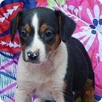 Adopt A Pet :: Zeus (5 lb) Video! - Sussex, NJ