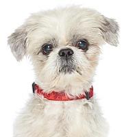 Adopt A Pet :: Baron - Los Angeles, CA