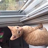 Adopt A Pet :: Clark - MCLEAN, VA