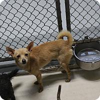 Adopt A Pet :: A36 Manson - Odessa, TX