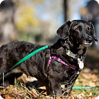 Adopt A Pet :: Dill: Adoption Pending - Verona, NJ