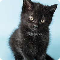 Adopt A Pet :: Suzanne - Hendersonville, NC
