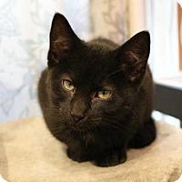 Adopt A Pet :: Charger - East Brunswick, NJ