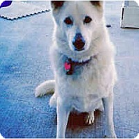 Adopt A Pet :: Kida - Courtesy Post - Scottsdale, AZ