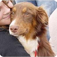 Adopt A Pet :: Rory - Orlando, FL