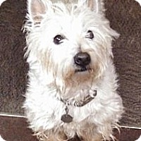 Adopt A Pet :: Oscar - Lynnwood, WA