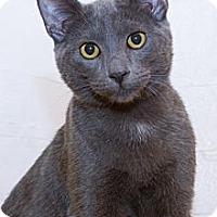 Adopt A Pet :: Rain - Irvine, CA