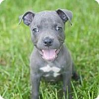Adopt A Pet :: Ghost - Austin, TX