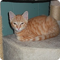 Adopt A Pet :: Leonard - Walkersville, MD