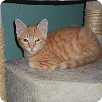 Adopt A Pet :: Leonard - Frederick, MD