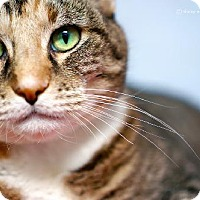 Adopt A Pet :: Sabrina - Tucson, AZ