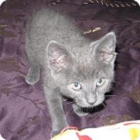 Adopt A Pet :: Scamper - Sacramento, CA