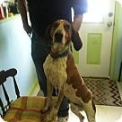 Adopt A Pet :: Lodi - Sherman, CT