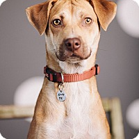 Adopt A Pet :: Hazelnut - Portland, OR