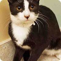 Adopt A Pet :: Patty - Hinsdale, IL
