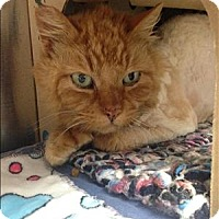 Adopt A Pet :: Leo - Cranbrook, BC