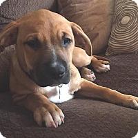 Adopt A Pet :: Bendita-Adopted! - Detroit, MI