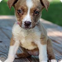Adopt A Pet :: Sadie - Waldorf, MD