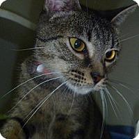 Adopt A Pet :: Mya - Hamburg, NY