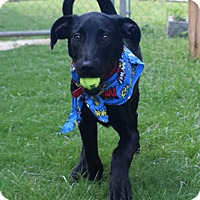 Adopt A Pet :: Cairo - Fort Collins, CO